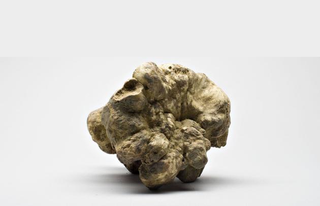 white truffle beli tartuf
