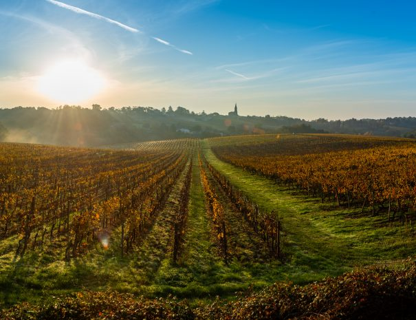 Sunset landscape and smog in bordeaux wineyard, Gironde, france, europe